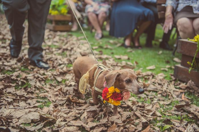 _ (36) Cão Entrando com Alianças, Cachorro Entrando com Alianças, Cão com Alianças de Casamento, Cachorro Entrando com Alianças de Casamento