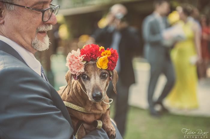_ (62) Cachorro no Casamento, Cão no Casamento